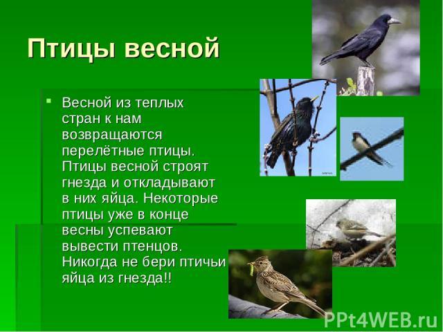 Птицы весной Весной из теплых стран к нам возвращаются перелётные птицы. Птицы весной строят гнезда и откладывают в них яйца. Некоторые птицы уже в конце весны успевают вывести птенцов. Никогда не бери птичьи яйца из гнезда!!