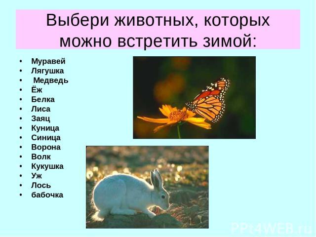 Выбери животных, которых можно встретить зимой: Муравей Лягушка Медведь Ёж Белка Лиса Заяц Куница Синица Ворона Волк Кукушка Уж Лось бабочка
