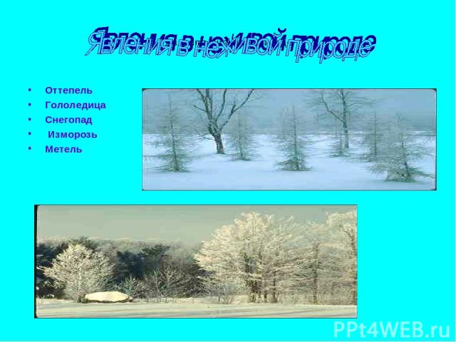 Явления в неивой природе Оттепель Гололедица Снегопад Изморозь Метель