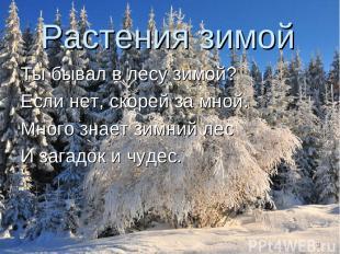 Растения зимой Ты бывал в лесу зимой? Если нет, скорей за мной. Много знает зимн