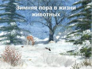 Зимняя пора в жизни животных *