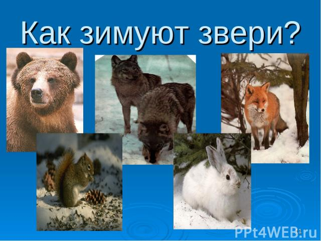 Как зимуют звери? *