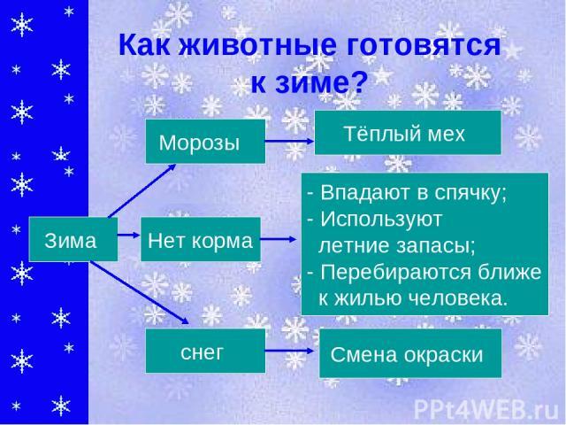 Как животные готовятся к зиме? Тёплый мех - Впадают в спячку; - Используют летние запасы; - Перебираются ближе к жилью человека. Смена окраски