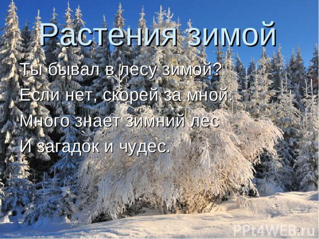 Растения зимой Ты бывал в лесу зимой? Если нет, скорей за мной. Много знает зимний лес И загадок и чудес. *