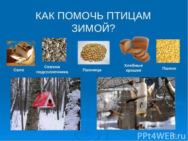 КАК ПОМОЧЬ ПТИЦАМ ЗИМОЙ? Сало Семена подсолнечника Пшеница Хлебные крошки Пшено *