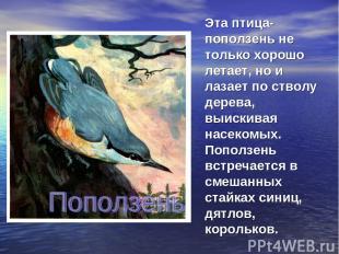 Эта птица- поползень не только хорошо летает, но и лазает по стволу дерева, выис