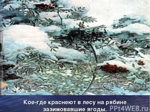 Кое-где краснеют в лесу на рябине зазимовавшие ягоды.