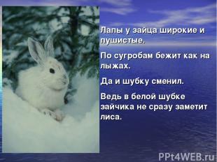 Лапы у зайца широкие и пушистые. По сугробам бежит как на лыжах. Да и шубку смен