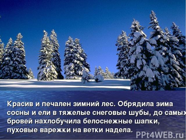 Красив и печален зимний лес. Обрядила зима сосны и ели в тяжелые снеговые шубы, до самых бровей нахлобучила белоснежные шапки, пуховые варежки на ветки надела.