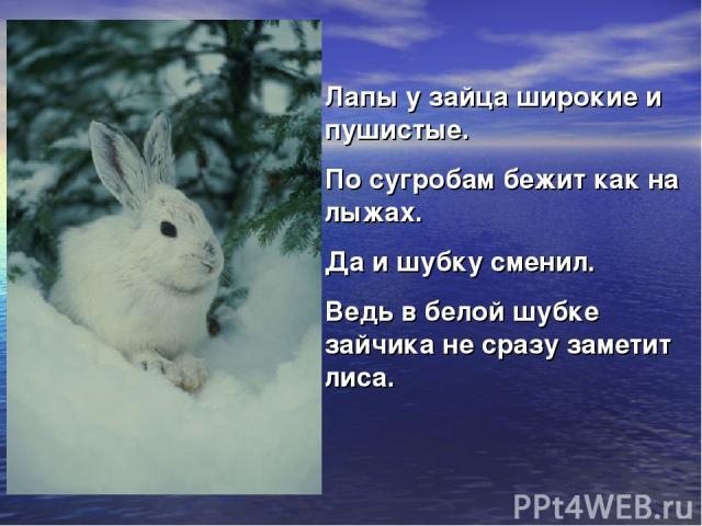 Лапы у зайца широкие и пушистые. По сугробам бежит как на лыжах. Да и шубку сменил. Ведь в белой шубке зайчика не сразу заметит лиса.