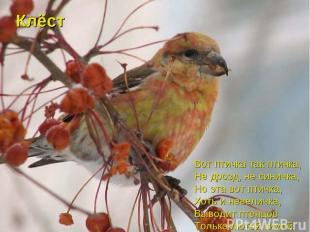 Вот птичка так птичка, Не дрозд, не синичка, Но эта вот птичка, Хоть и невеличка