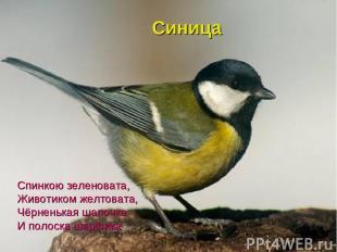 Спинкою зеленовата, Животиком желтовата, Чёрненькая шапочка И полоска шарфика Си