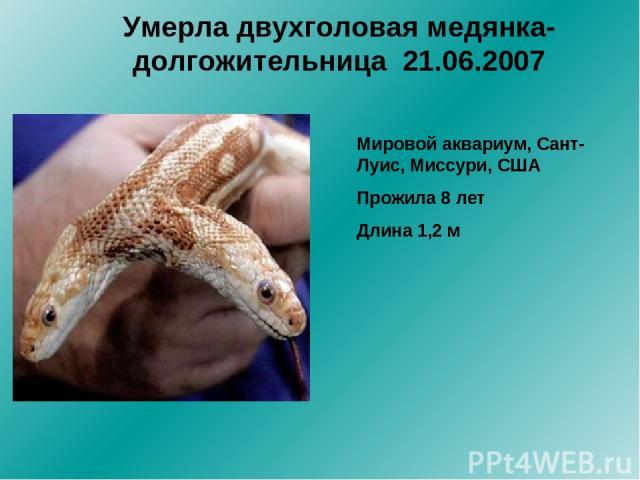 Умерла двухголовая медянка-долгожительница 21.06.2007 Мировой аквариум, Сант-Луис, Миссури, США Прожила 8 лет Длина 1,2 м