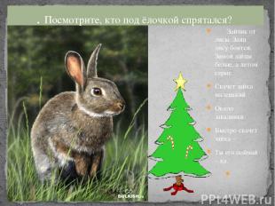 Зайчик от лисы. Заяц лису боится. Зимой зайцы белые, а летом серые. Скачет зайка