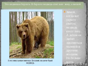 Это медвежья берлога. В берлоге медведь спит всю зиму, а весной просыпается. Зим
