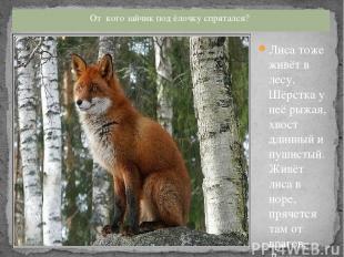 Лиса тоже живёт в лесу. Шёрстка у неё рыжая, хвост длинный и пушистый. Живёт лис