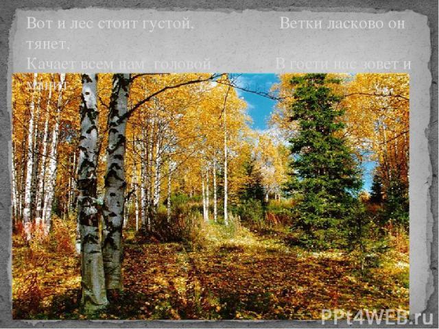 Вот и лес стоит густой, Ветки ласково он тянет, Качает всем нам головой В гости нас зовет и манит.