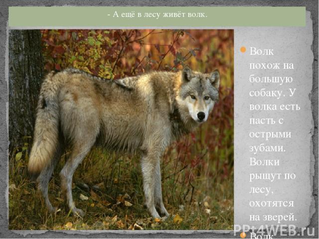 Волк похож на большую собаку. У волка есть пасть с острыми зубами. Волки рыщут по лесу, охотятся на зверей. Волк зимой холодной ходит злой, голодный. - А ещё в лесу живёт волк.