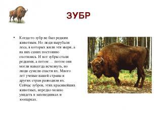 ЗУБР Когда-то зубр не был редким животным. Но люди вырубали леса, в которых жили