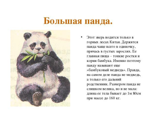 Большая панда. Этот зверь водится только в горных лесах Китая. Держится панда чаще всего в одиночку, прячась в густых зарослях. Ее главная пища – тонкие ростки и корни бамбука. Именно поэтому панду называют еще «бамбуковый медведь». Правда, на самом…