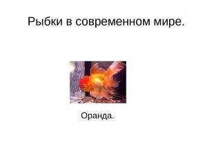 Рыбки в современном мире. Оранда.