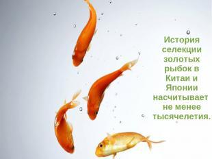 История селекции золотых рыбок в Китаи и Японии насчитывает не менее тысячелетия