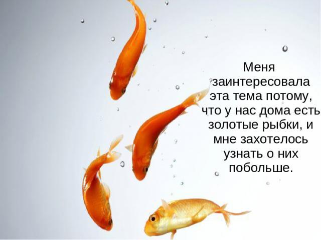 Меня заинтересовала эта тема потому, что у нас дома есть золотые рыбки, и мне захотелось узнать о них побольше.