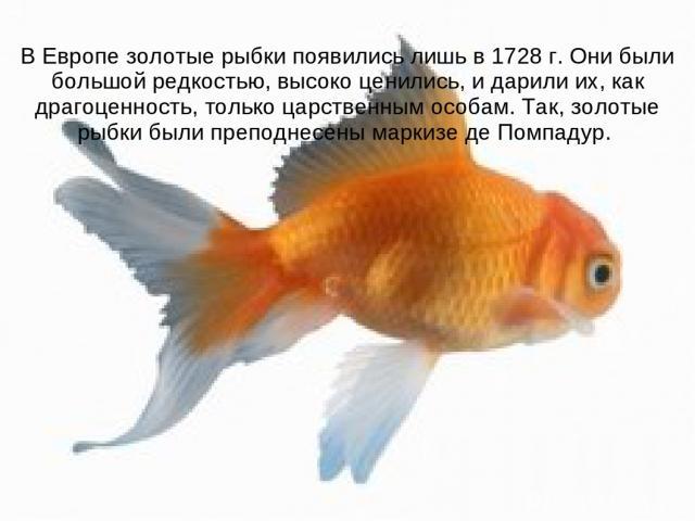 В Европе золотые рыбки появились лишь в 1728 г. Они были большой редкостью, высоко ценились, и дарили их, как драгоценность, только царственным особам. Так, золотые рыбки были преподнесены маркизе де Помпадур.