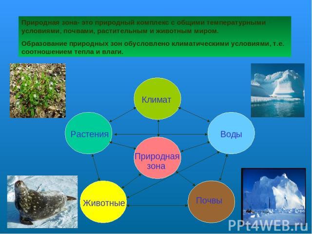 Природная зона- это природный комплекс с общими температурными условиями, почвами, растительным и животным миром. Образование природных зон обусловлено климатическими условиями, т.е. соотношением тепла и влаги. Климат Растения Воды Почвы Природная з…