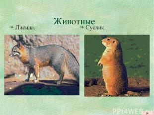 Животные Лисица. Суслик.