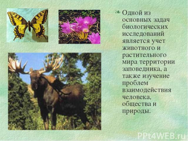 Одной из основных задач биологических исследований является учет животного и растительного мира территории заповедника, а также изучение проблем взаимодействия человека, общества и природы.