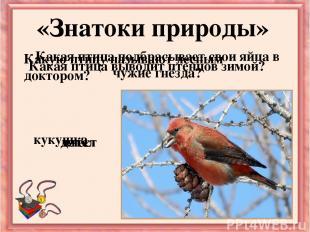 Какая птица подбрасывает свои яйца в чужие гнёзда? «Знатоки природы» Какую птицу