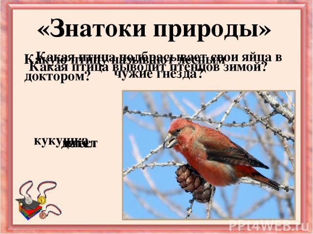 Какая птица подбрасывает свои яйца в чужие гнёзда? «Знатоки природы» Какую птицу называют лесным доктором? Какая птица выводит птенцов зимой? кукушка дятел клёст