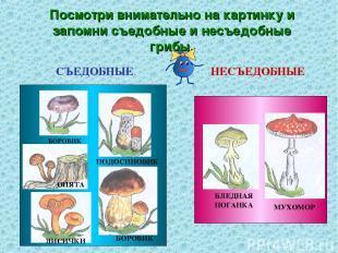Посмотри внимательно на картинку и запомни съедобные и несъедобные грибы. СЪЕДОБ
