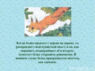 Когда белка прыгает с дерева на дерево, то расправляет свой пушистый хвост, и он
