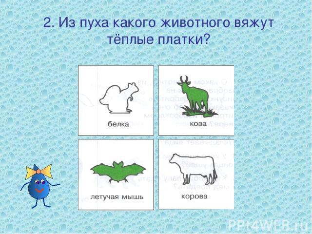 2. Из пуха какого животного вяжут тёплые платки?