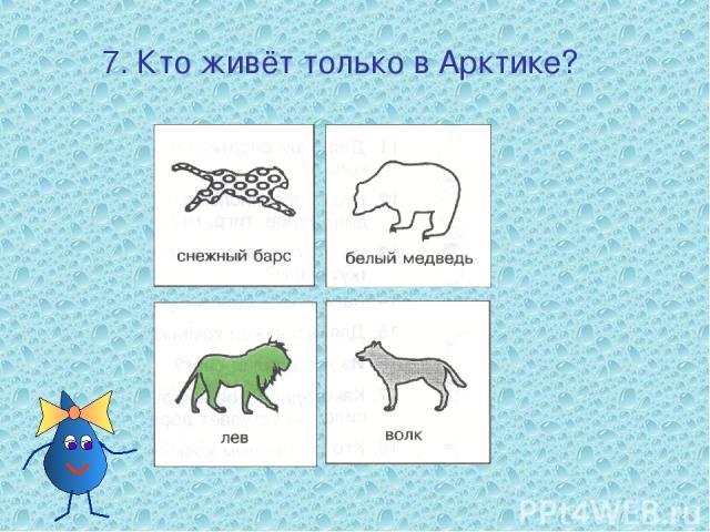 7. Кто живёт только в Арктике?