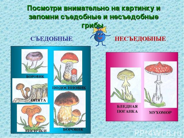 Посмотри внимательно на картинку и запомни съедобные и несъедобные грибы. СЪЕДОБНЫЕ НЕСЪЕДОБНЫЕ