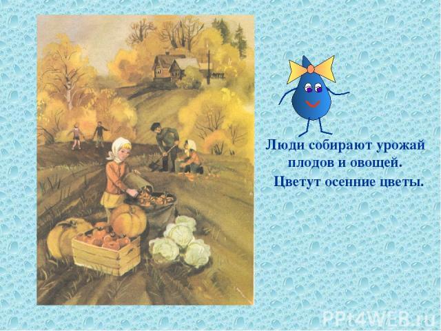 Люди собирают урожай плодов и овощей. Цветут осенние цветы.