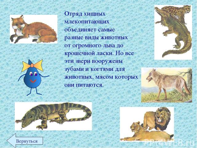 Отряд хищных млекопитающих объединяет самые разные виды животных – от огромного льва до крошечной ласки. Но все эти звери вооружены зубами и когтями для животных, мясом которых они питаются. Вернуться
