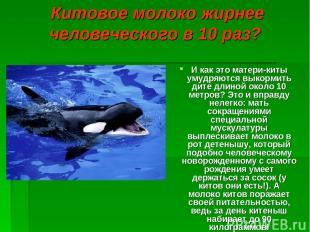 Китовое молоко жирнее человеческого в 10 раз? И как это матери-киты умудряются в