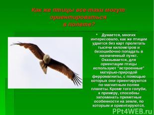 Как же птицы все-таки могут ориентироваться в полете? Думается, многих интересов