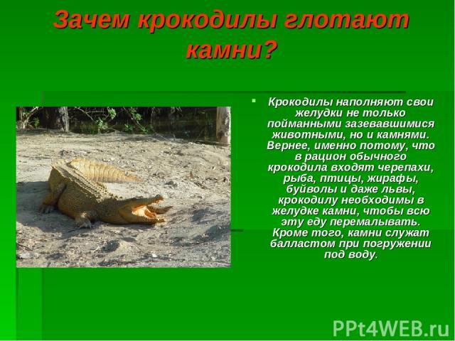 Зачем крокодилы глотают камни? Крокодилы наполняют свои желудки не только пойманными зазевавшимися животными, но и камнями. Вернее, именно потому, что в рацион обычного крокодила входят черепахи, рыба, птицы, жирафы, буйволы и даже львы, крокодилу н…