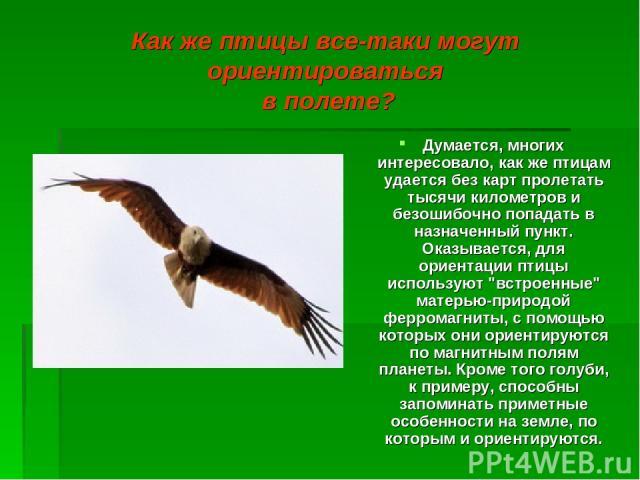 Как же птицы все-таки могут ориентироваться в полете? Думается, многих интересовало, как же птицам удается без карт пролетать тысячи километров и безошибочно попадать в назначенный пункт. Оказывается, для ориентации птицы используют