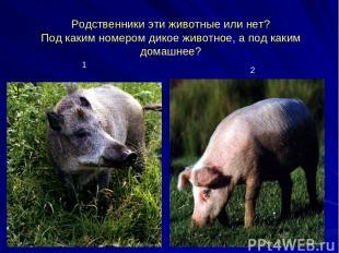Родственники эти животные или нет? Под каким номером дикое животное, а под каким