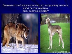 Выскажите своё предположение по следующему вопросу: могут ли эти животные быть р