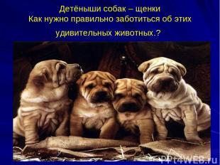 Детёныши собак – щенки Как нужно правильно заботиться об этих удивительных живот