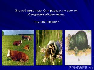 Это всё животные. Они разные, но всех их объединяет общая черта. Чем они похожи?