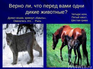 Верно ли, что перед вами одни дикие животные? Думал кошка, крикнул «Брысь», Оказ