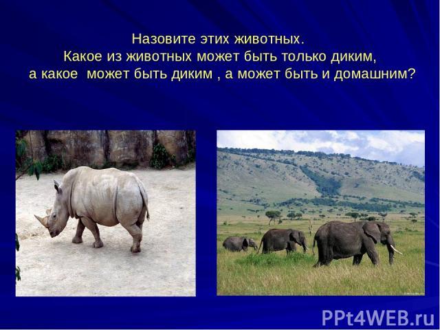 Назовите этих животных. Какое из животных может быть только диким, а какое может быть диким , а может быть и домашним?